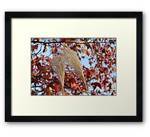 Pampas Grass in Fall Framed Print