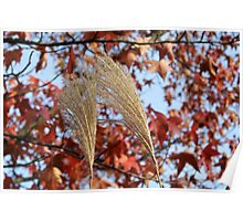 Pampas Grass in Fall Poster