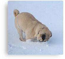 Pug Dog Playing in Winter Christmas Snow Canvas Print