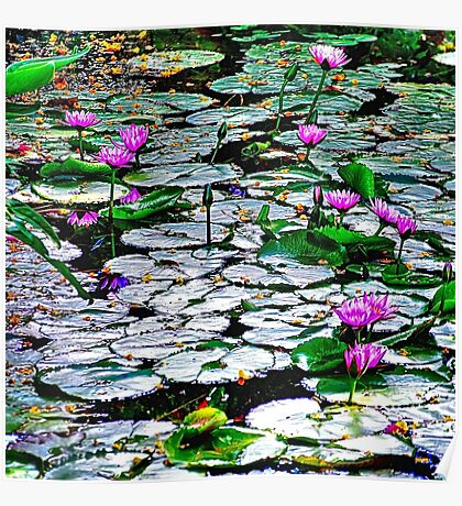 Pond of  Water Lilies Poster