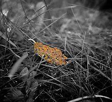 fallen leaves  by spechtarts