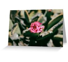 Pink Prickly Pear Greeting Card