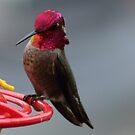 Hummingbird II by Laura Puglia