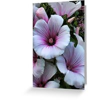 Lavatera Loveliness Greeting Card