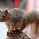 Squirrel by Laura Puglia