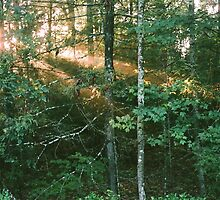 Forest Sunbeams at Golden Hour by dearmoon