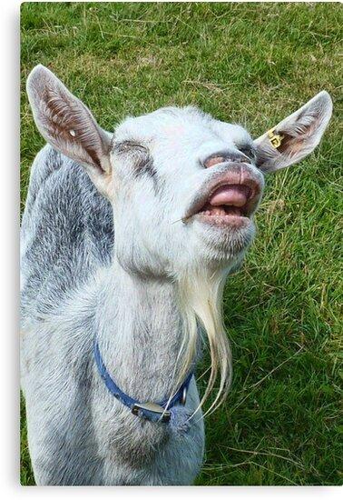 Funny Face by lynn carter