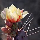 Prickly Pear Flower by rrushton