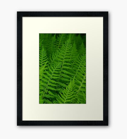 There is Magic in the Fern Framed Print