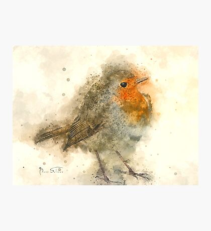 Robin Red-breast 3 Photographic Print