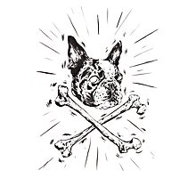 Pirate Boston Terrier Flag Photographic Print