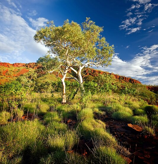 Colours of the Outback by Mieke Boynton
