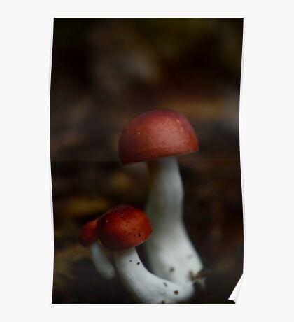 A Little Family of Mushrooms Poster