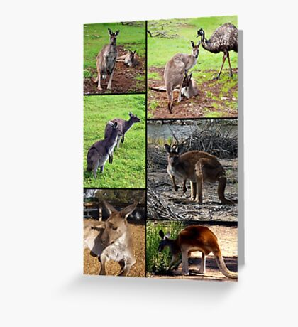 Aussie Kangaroos In A Photo Collage Greeting Card