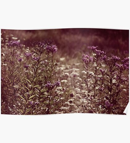 A Late Summer Patch of Flowers Poster