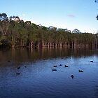 Underwood Lagoon by Wayne  Nixon  (W E NIXON PHOTOGRAPHY)