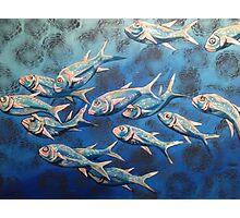 Swimming Salmon Photographic Print