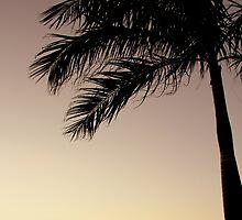 Darwin Sunset by Camilla