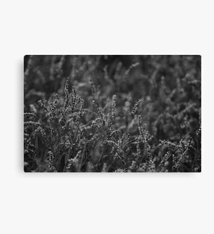 Tiny Little Flowers Monochrome Canvas Print