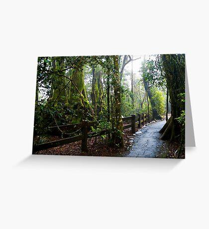 Beech Walkway Greeting Card