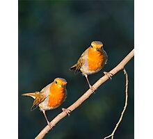 Mr & Mrs Robin Red Breast Photographic Print