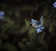 MOONLIT BUTTERFLY by Sandy Stewart