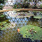Water Lillies by Wayne  Nixon  (W E NIXON PHOTOGRAPHY)