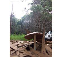 Off Road Mushrooms Photographic Print