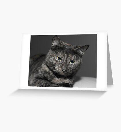 Beautiful Cat   Greeting Card