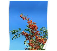 Reach for the sky! Profusion of Berries Poster