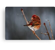 ON A COLD MORNING Canvas Print