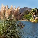 Pampas Grass At Lake Murray by Heather Friedman