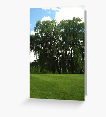 Weeping Willow Trees Photo Greeting Card
