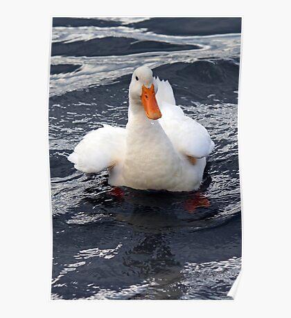 I'm Quackers! Poster