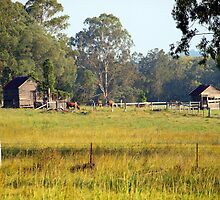 Life on the land by Wayne  Nixon  (W E NIXON PHOTOGRAPHY)