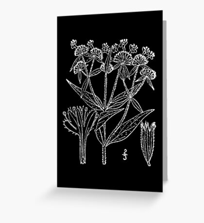 Britton And Brown Illustrated flora of the northern states and Canada 1211 Pycnanthemum verticillatu Greeting Card