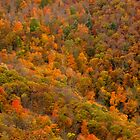 Hillside Colors - Blue Ridge Parkway by ctheworld