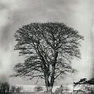 The tree outside of Bisley by Jeff  Wilson