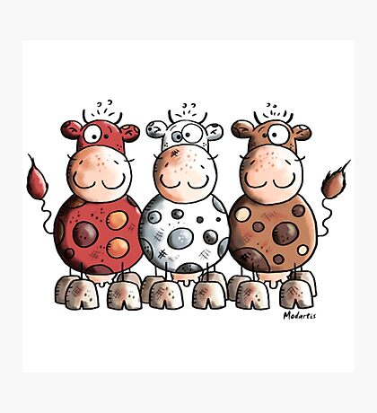 Funny Colourful Cows - Cow Shirt For Boys Photographic Print