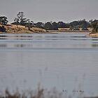 Brown Land by jane mcainsh