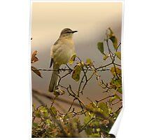 Mockingbird Poster