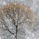 20.1.2017: Tree in snowfall III by Petri Volanen