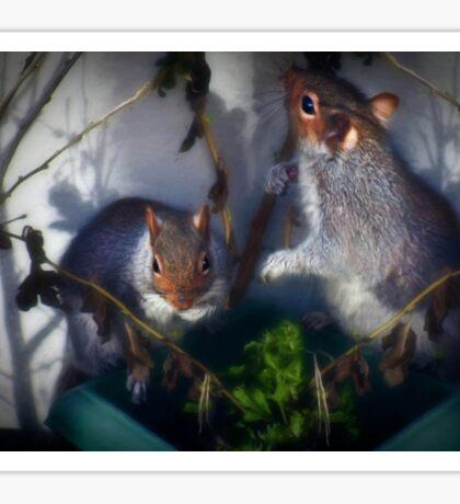 Potted squirrel Sticker