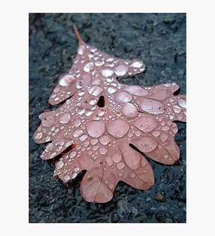 Fall Rain Photographic Print