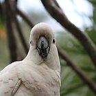 Cockatoo at Twilight by aussiebushstick