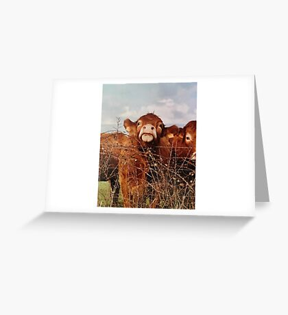 Limousin Cow Greeting Card