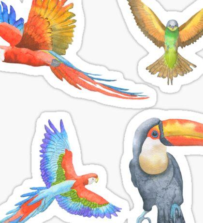 Exotic Birds Sticker Set Parrot Toucan Macaw Sticker