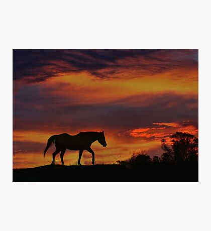 Sunset Colors with Arabian Silhouette Photographic Print