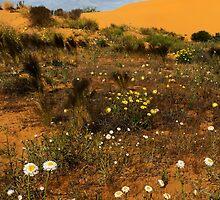 Perry Sandhills by Colin  Ewington