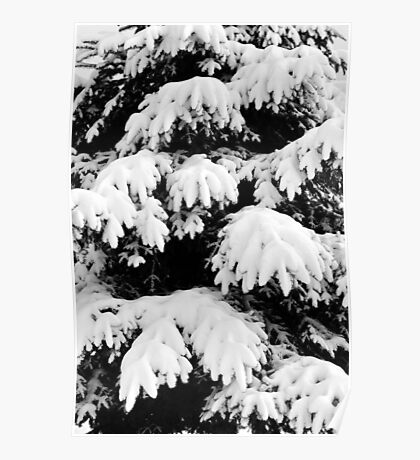 Snow Covered Fir Tree Poster